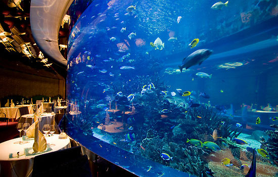 Mesmerizing Aquariums Of Dubai Arabic Guy