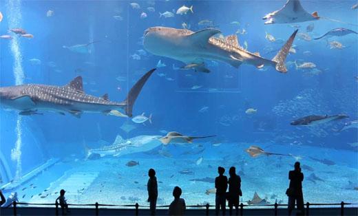 Dubai Aquarium and Und...